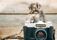 chaton-appareil-photo-41916105