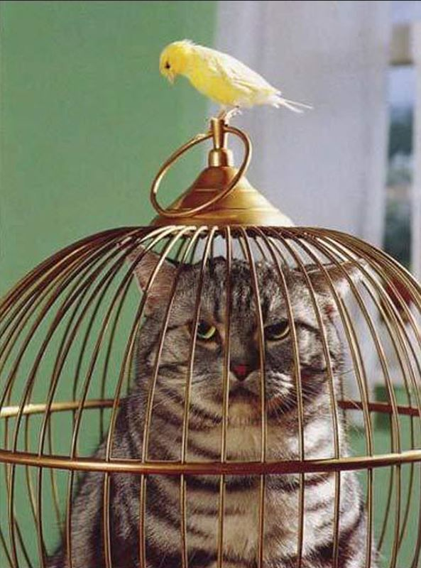 cage chat