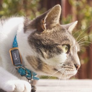 collier GPS + chat